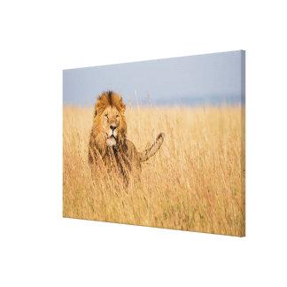 Männlicher Löwe versteckt im Gras Leinwanddruck