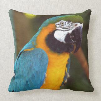 Männlicher Macaw Kissen