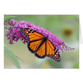 Männlicher Monarch auf Schmetterling Bush Karte