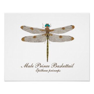Männlicher Prinz Baskettail Dragonfly Art Poster