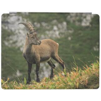 Männlicher wilder alpiner, Caprasteinbock oder iPad Hülle