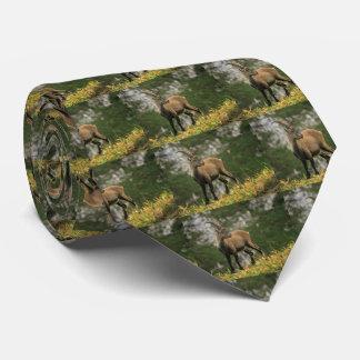 Männlicher wilder alpiner, Caprasteinbock oder Krawatte