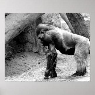 Männliches Gorilla-Profil in Schwarzweiss Poster