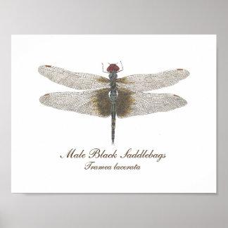 Männliches schwarzes Saddlebags-Libellen-Aquarell Poster