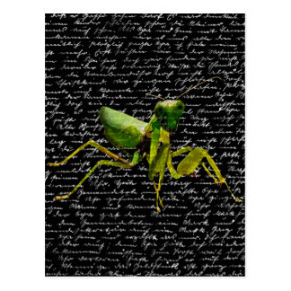 Mantis Postkarte