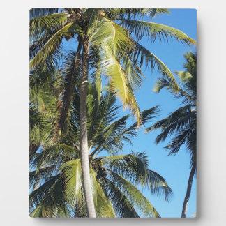 Maragogi Palmen Fotoplatte