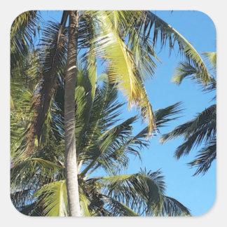 Maragogi Palmen Quadratischer Aufkleber