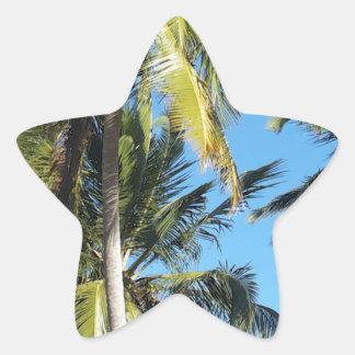Maragogi Palmen Stern-Aufkleber