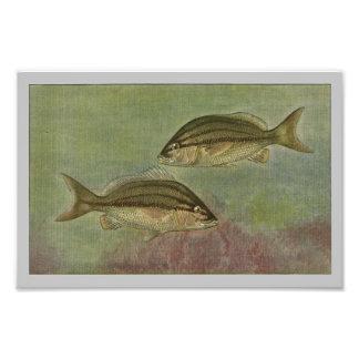 Margate Fisch-Vintager Fisch-Druck Fotodruck