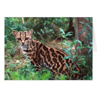 Margay, Leopardus wiedi, gebürtig nach Mexiko in Karte
