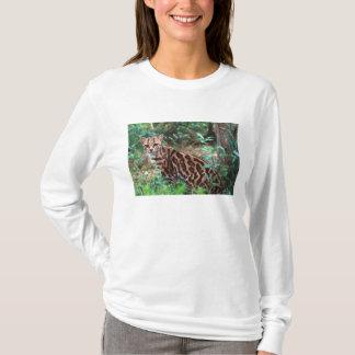 Margay, Leopardus wiedi, gebürtig nach Mexiko in T-Shirt