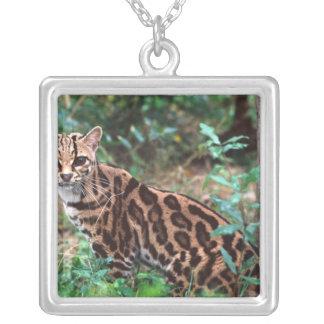 Margay, Leopardus wiedi, gebürtig nach Mexiko in Versilberte Kette