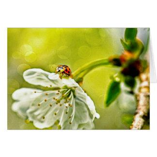 Marienkäfer auf Blume Karte