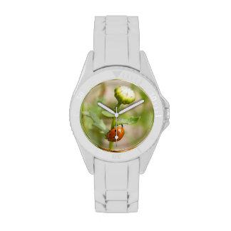 Marienkäfer auf einer Gänseblümchen-Knospe Uhr