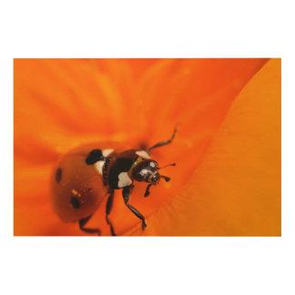Marienkäfer auf einer Mohnblume Holzleinwand