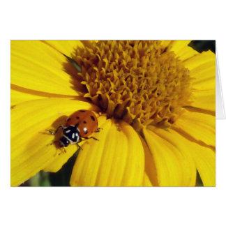 Marienkäfer auf einer Sonnenblume Karte