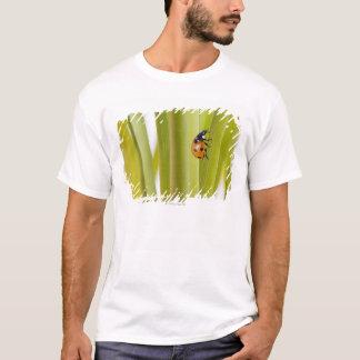 Marienkäfer auf Pflanzenstämmen T-Shirt