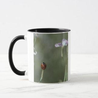 Marienkäfer auf Stamm Tasse
