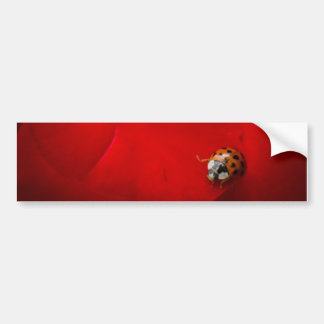 Marienkäfer in der Roten Rose Autoaufkleber