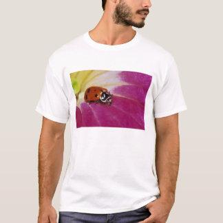 Marienkäfer-Käfer. (Hippodamia convergens) T-Shirt