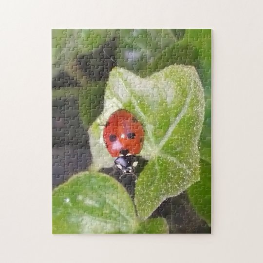 Marienkäfer Ladybug Puzzle
