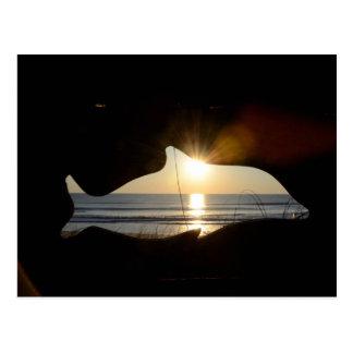 Marineland Strand-Florida-Delphin in der Sonne Postkarte