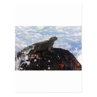 Marineleguan auf Felsen Galapagos-Inseln Postkarte