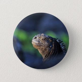 Marineleguan Galapagos-Inseln Runder Button 5,1 Cm