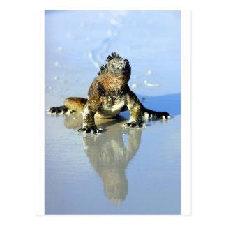 Marineleguan Galapagos Postkarte