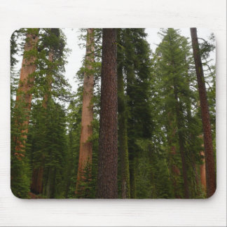 Mariposa Waldung in Yosemite Nationalpark Mousepad