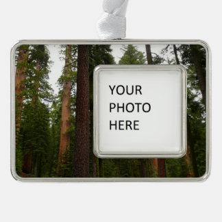 Mariposa Waldung in Yosemite Nationalpark Rahmen-Ornament Silber