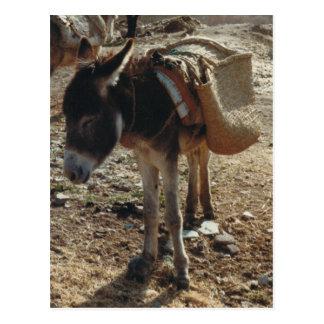 Marokko-Maultier-Postkarte Postkarte