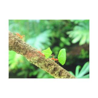 März der Ameisen Leinwanddruck