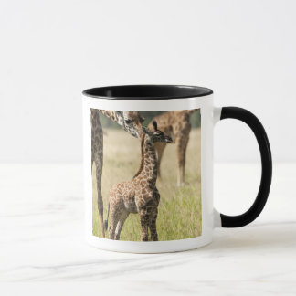 Masaigiraffen, Giraffa camelopardalis 2 Tasse