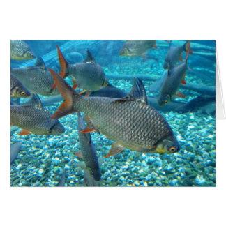Masse der Fische Karte