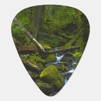 Mäßiger Regenwald-Strom in Columbia River Plektrum