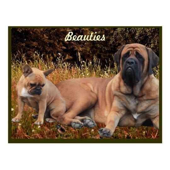 Mastiff mit französischer Bulldogge Postkarte