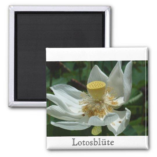 Mauritius, Lotosblüte Quadratischer Magnet