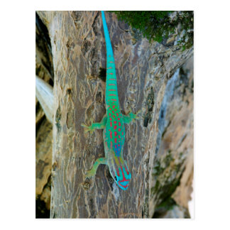 Mauritius-Tiefland-WaldtagesGecko Postkarte