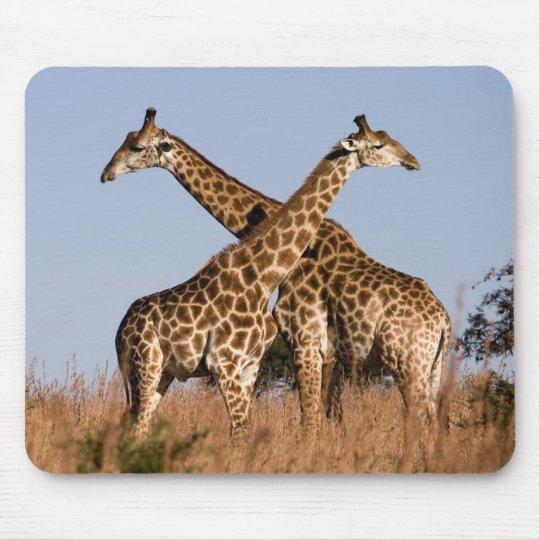 Mauspad Giraffen