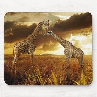Mauspad Giraffen Sonnenuntergang