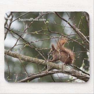 Mausunterlage mit Eichhörnchen Mousepad