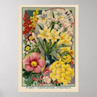 Mayflower Vintage Samen-Abdeckung Poster