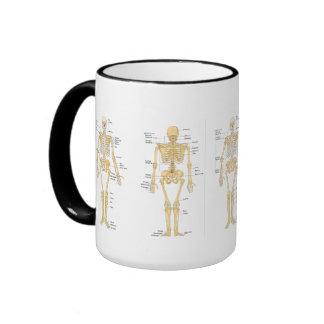 Medizin: Skelett Ringer Tasse