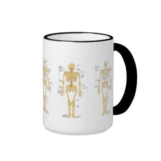 Medizin: Skelett Kaffee Haferl
