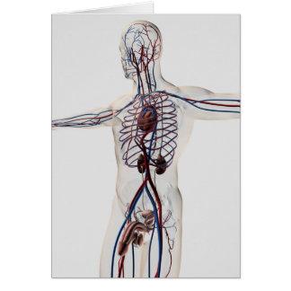 Medizinische Illustration: Männliches Grußkarte