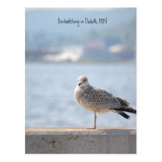 Meer Gull2, Vogelbeobachtung in Duluth, Mangan Postkarte