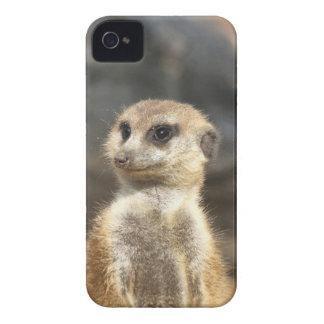 Meercat iPhone 4 Case-Mate Hüllen