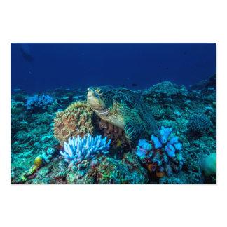 Meeresschildkröte auf dem Great Barrier Reef Fotodruck