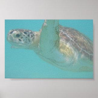 Meeresschildkröte Poster